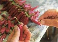 sewing paprika
