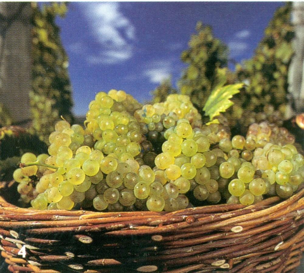 Hungarian wine 3