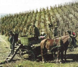Hungarian red wine_1