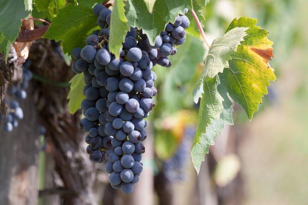 wine-989268_1280
